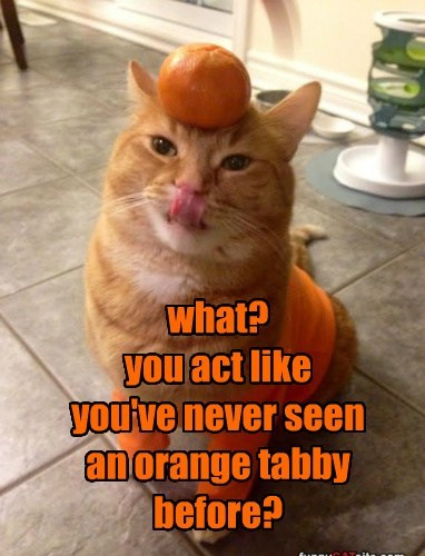 what? you act like  you've never seen an orange tabby before?