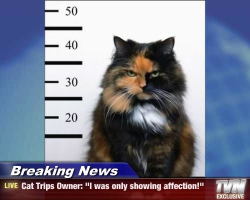 "Breaking News - Cat Trips Owner: ""I was only showing affection!"""