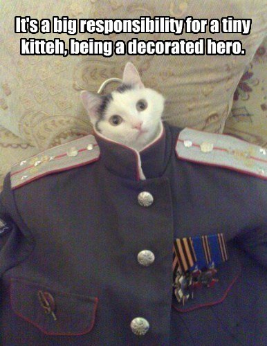 It's a big responsibility for a tiny kitteh, being a decorated hero.