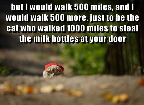 but I would walk 500 miles, and I would walk 500 more, just to be the cat who walked 1000 miles to steal the milk bottles at your door