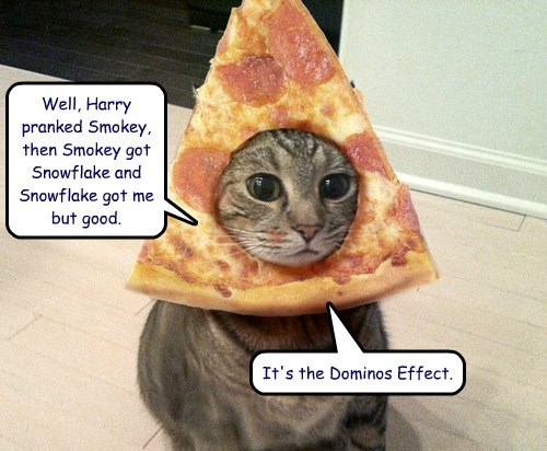 Well, Harry pranked Smokey, then Smokey got Snowflake and Snowflake got me but good.