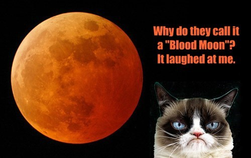 NEVER laugh at Grumpy Cat!
