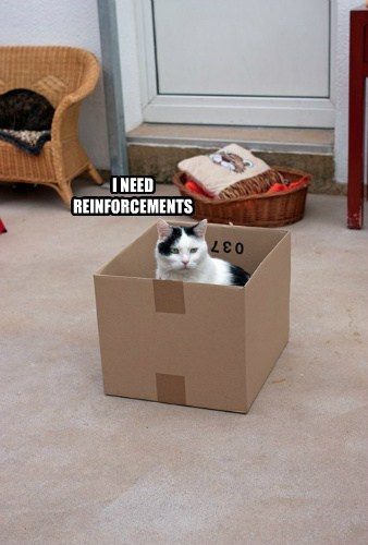 The Kitteh needz reinforcements