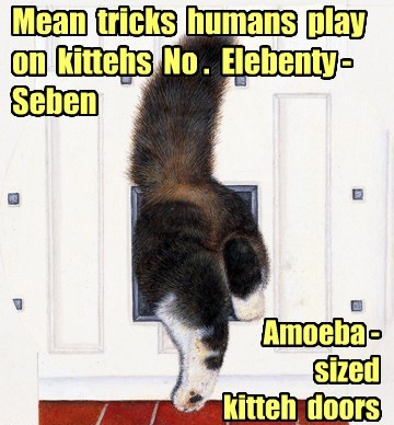 Mean human tricks juss so dey can take pikchurs
