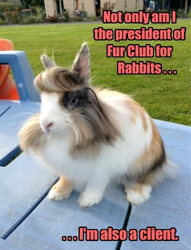 Balding Bunnies Be Gone!