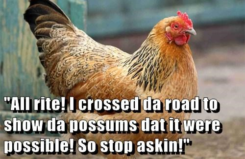 """All rite! I crossed da road to show da possums dat it were possible! So stop askin!"""