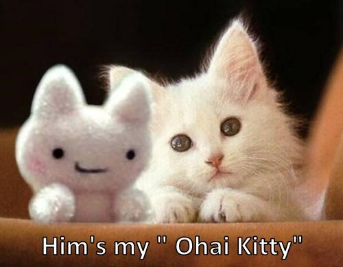 "Him's my "" Ohai Kitty"""