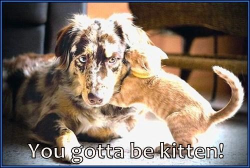 You gotta be kitten!