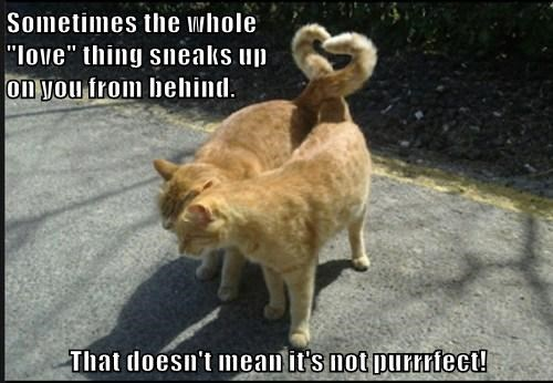 "Sometimes the whole                                                                   ""love"" thing sneaks up                                                    on you from behind.   That doesn't mean it's not purrrfect!"