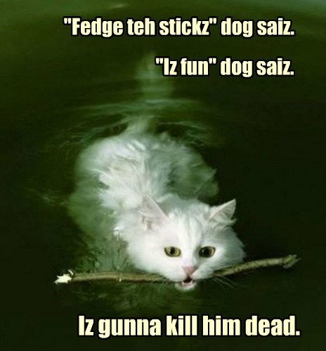 """Fedge teh stickz"" dog saiz."