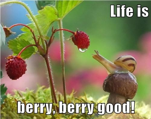 Life is  berry, berry good!