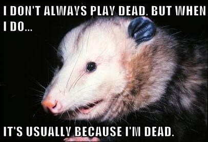 The Most Interesting Opossum In The World