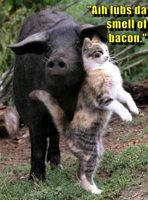 """Aih lubs da                                                       smell of                                                                                    bacon."""