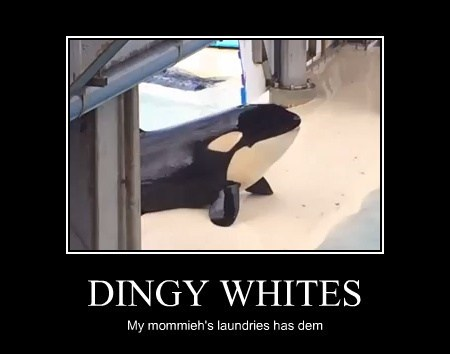DINGY WHITES