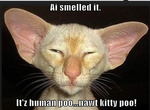 Ai smelled it.   It'z human poo...nawt kitty poo!