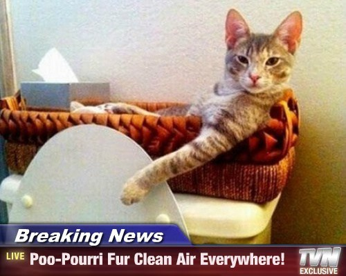 Breaking News - Poo-Pourri Fur Clean Air Everywhere!