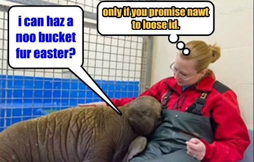 walrus wants a noo bucket