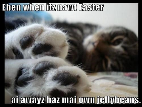 Eben when itz nawt Easter  ai awayz haz mai own jellybeans.