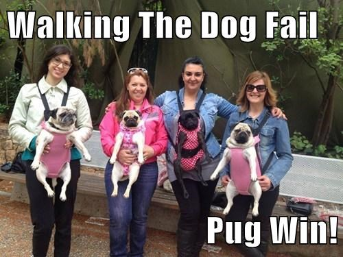 Walking The Dog Fail  Pug Win!