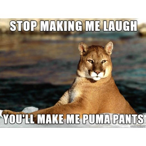 puma,laugh,funny,puns