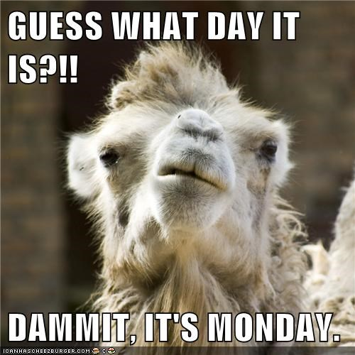 The Monday Camel?