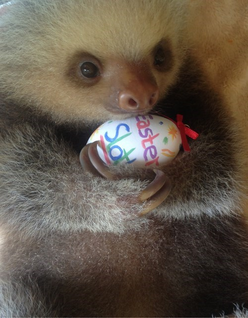 It Might Have Taken a Few Days, but This Sloth Found an Easter Egg