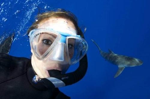 sharks,scuba,selfie
