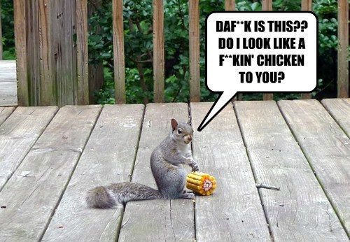 First Squirrel Problems