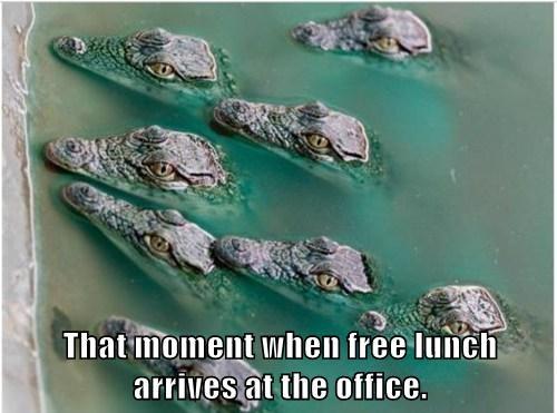 alligators,lunch,scary,stalk