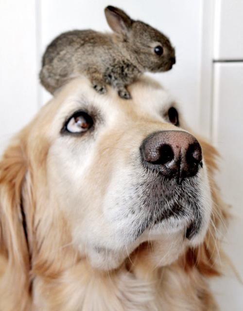bunnies,dogs,cute