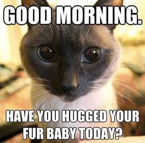 How Often do You Hug Your Kitteh?