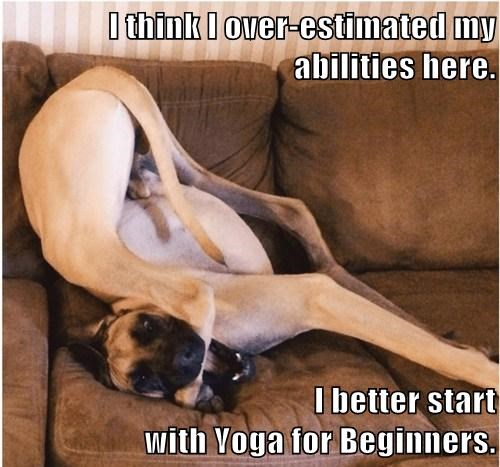 I think I over-estimated my abilities here.  I better start                                                      with Yoga for Beginners.