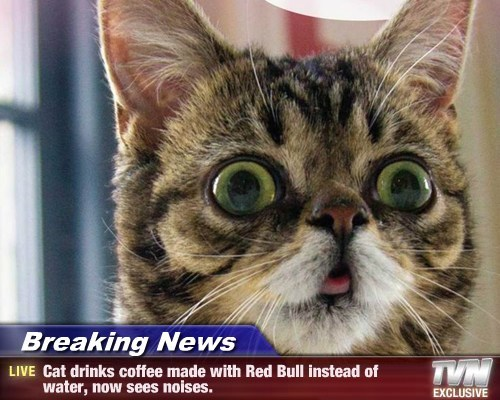Breaking News - Cat drinks coffee made with Red Bull instead of water, now sees noises.