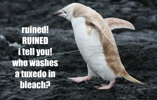 ruined! RUINED  i tell you! who washes  a tuxedo in bleach?