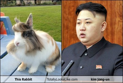 This Rabbit Totally Looks Like kim jong-un