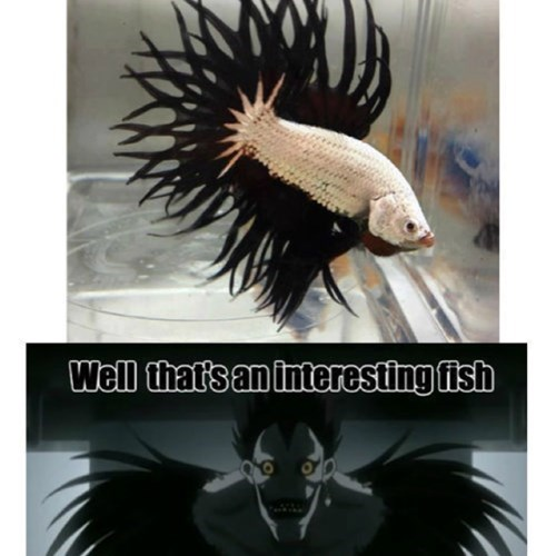 anime,fish,death note