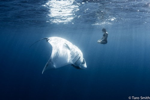 Photo of the Day: Woman in an Underwater Yoga Pose Beside a 1,500-pound Manta Ray