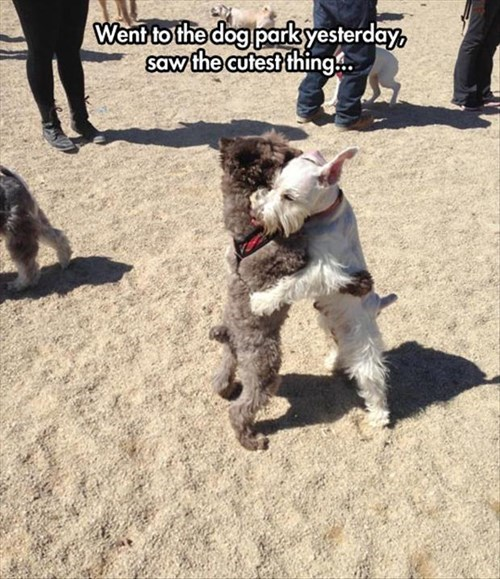 dogs,friends,cute,hugs