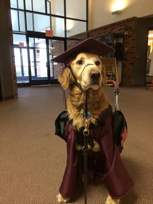 cerebral palsy,dogs,loyalty,graduation,service dogs