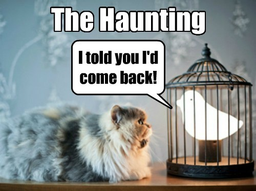 Cats,birds,ghost,funny