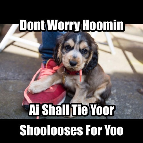 cute,dogs,help,funny,puppies,shoes