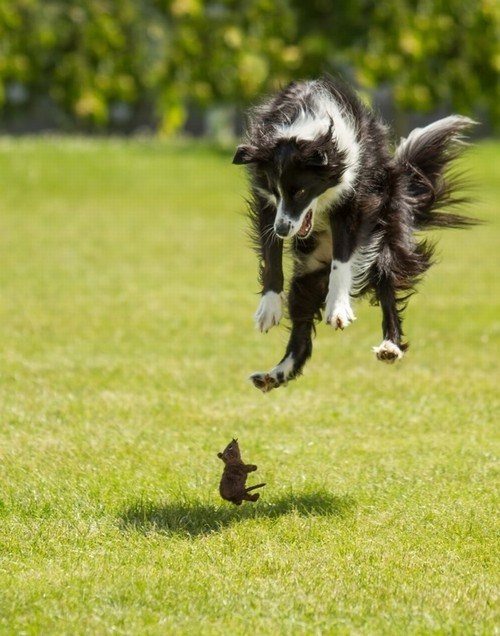 dogs,mice,playing,toys