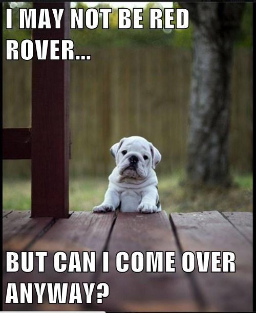 games,Red Rover,puppies,cutek
