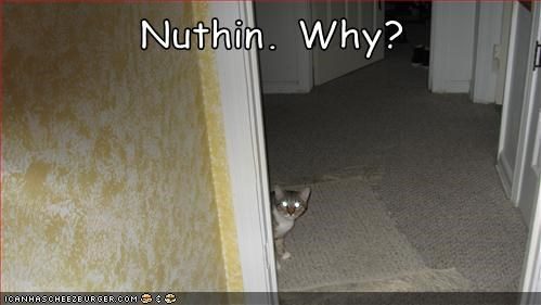That's a Guilty Cat if I've Ever Seen One...