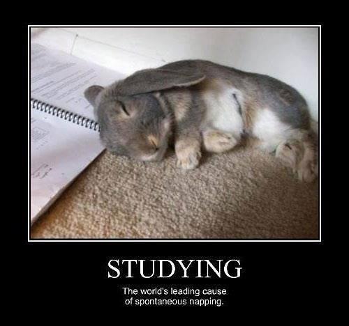 studying,bunnies,naps