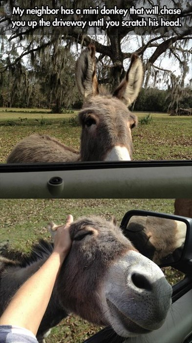 cute,chase,friendly,donkey,scratch