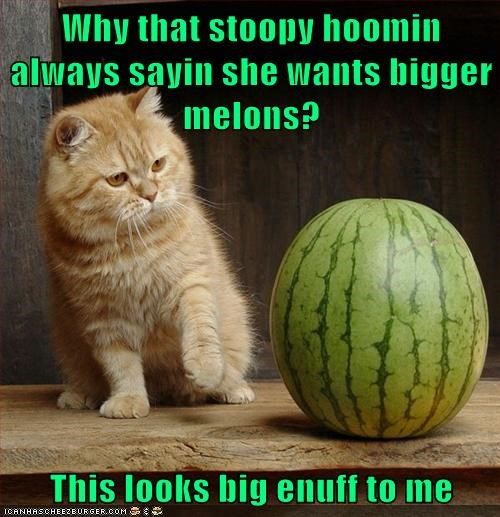 Why that stoopy hoomin always sayin she wants bigger melons?  This looks big enuff to me
