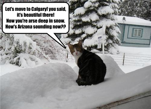 Let's move to Calgary! you said, it's beautiful there!  Now you're arse deep in snow.  How's Arizona sounding now??