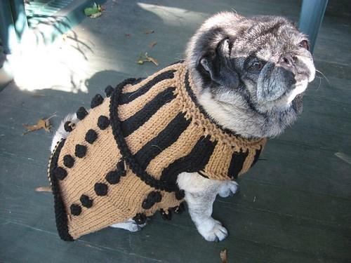 daleks,pug,dog costumes