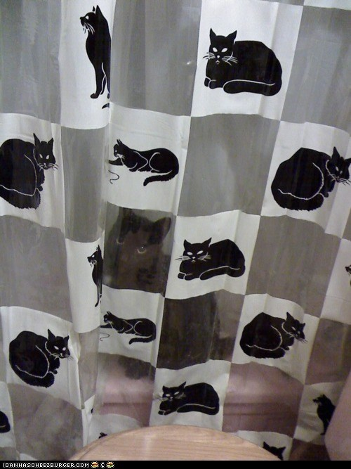 Cats,disguise,shower,camoflouge